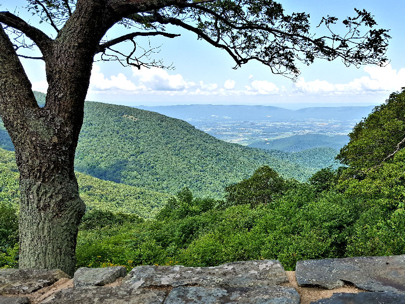 Overlook on Skyline Drive in the Shenandoah National Park